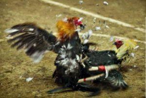 feathers-fly-ii